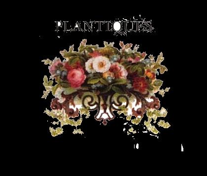 catalog advanced search bulverde, tx florist  plantiques floral, Beautiful flower